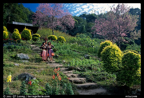 Children in traditinal hmong dress in flower garden. Chiang Mai, Thailand (color)