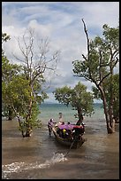Long tail boat navigating through mangrove trees, Railay. Krabi Province, Thailand