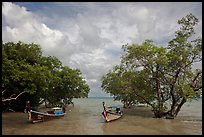Boats moored near mangrove trees, Railay East. Krabi Province, Thailand (color)