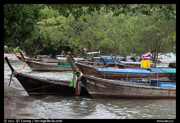 Long tail boats and trees, Ao Rai Leh East. Krabi Province, Thailand (color)