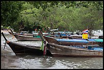 Long tail boats and trees, Ao Rai Leh East. Krabi Province, Thailand