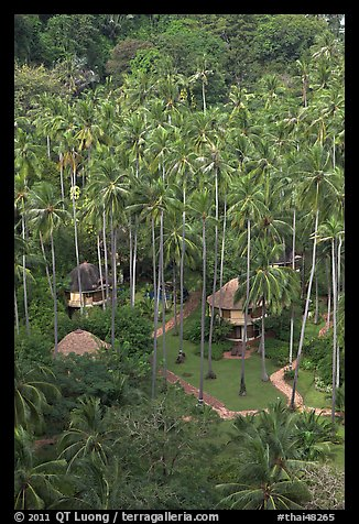 Huts and palm trees from above, Railay. Krabi Province, Thailand (color)