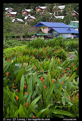 Tropical flowers and hillside houses, Ko Phi Phi. Krabi Province, Thailand (color)