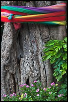 Detail of sacred banyan tree with ribbons, Ko Phi-Phi island. Krabi Province, Thailand ( color)