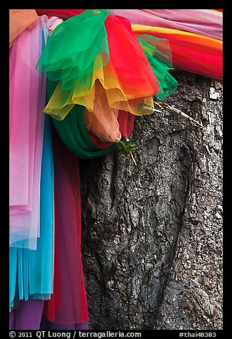 Colored ribbons on banyan tree, Ko Phi-Phi Don. Krabi Province, Thailand (color)