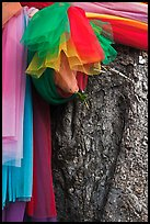 Colored ribbons on banyan tree, Ko Phi-Phi Don. Krabi Province, Thailand ( color)