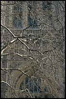 Bare branches and palace of Westminster facade. London, England, United Kingdom