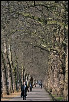 Businessman walking in an alley of James Park with bare trees. London, England, United Kingdom (color)