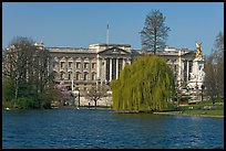 Buckingham Palace and lake, Weeping Willow (salix babylonica),  Saint James Park. London, England, United Kingdom
