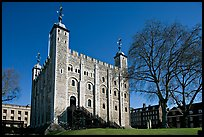 White Tower and tree, the Tower of London. London, England, United Kingdom