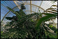 Tree canopy in the Palm House. Kew Royal Botanical Gardens,  London, England, United Kingdom ( color)