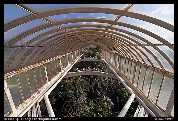 Wrought iron roof of the Palm House. Kew Royal Botanical Gardens,  London, England, United Kingdom (color)