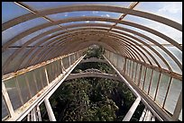 Wrought iron roof of the Palm House. Kew Royal Botanical Gardens,  London, England, United Kingdom ( color)