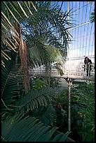Visitor looking down from the balcony walkway of the Palm House. Kew Royal Botanical Gardens,  London, England, United Kingdom ( color)