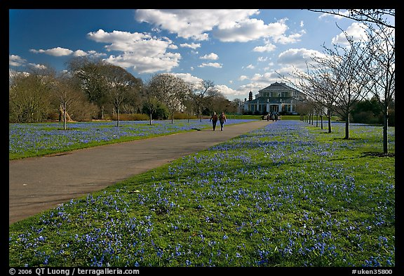 Bluebells on the path leading to the Temperate House. Kew Royal Botanical Gardens,  London, England, United Kingdom (color)
