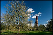 Great Pagoda and tree in bloom. Kew Royal Botanical Gardens,  London, England, United Kingdom ( color)
