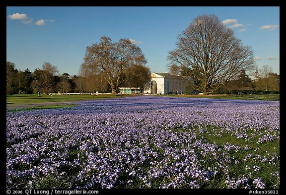 Glories of the Snow (Chionodoxa) and Orangerie. Kew Royal Botanical Gardens,  London, England, United Kingdom