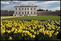 Queen's House and colonnades of the Royal Maritime Museum, with Daffodils in foreground. Greenwich, London, England, United Kingdom