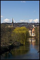 River Avon, willows, and church spire. Bath, Somerset, England, United Kingdom