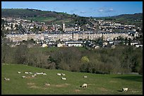 Sheep on hill, with town below. Bath, Somerset, England, United Kingdom