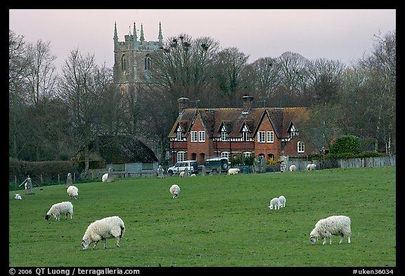 Sheep in pasture, village houses and church, Avebury, Wiltshire. Wiltshire, England, United Kingdom (color)