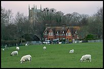 Sheep in pasture, village houses and church, Avebury, Wiltshire. Wiltshire, England, United Kingdom