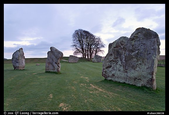 Megaliths and tree, Avebury, Wiltshire. England, United Kingdom (color)