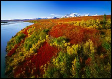 Susitna River and autumn colors on the tundra. Alaska, USA