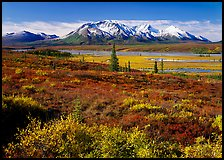 Tundra and snowy mountains. Alaska, USA