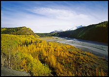 Matanuska River valley and aspens in fall color. Alaska, USA