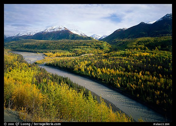 Autumn Aspens, Matanuska River, and Chugach mountains. Alaska, USA (color)
