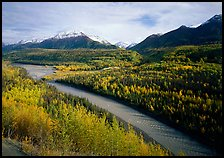 Autumn Aspens, Matanuska River, and Chugach mountains. Alaska, USA