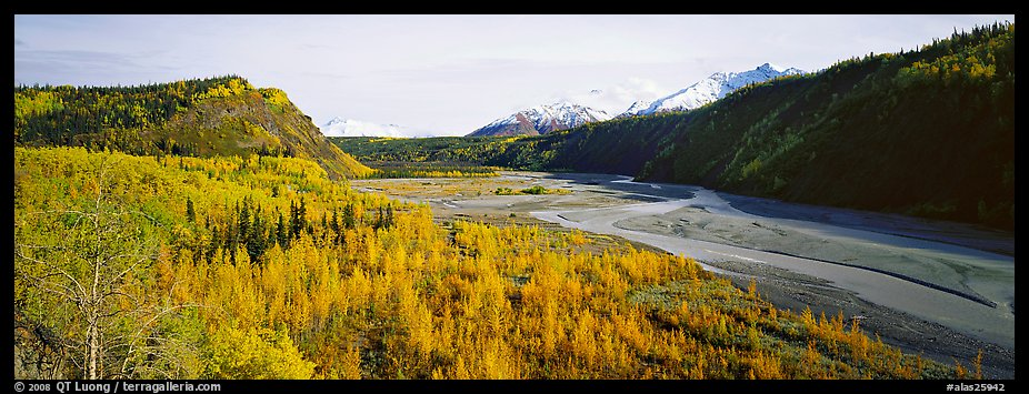 Wide valley with aspen in autumn colors. Alaska, USA (color)