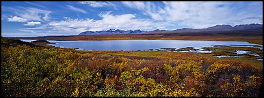 Tundra landscape with lake in autumn. Alaska, USA (Panoramic color)