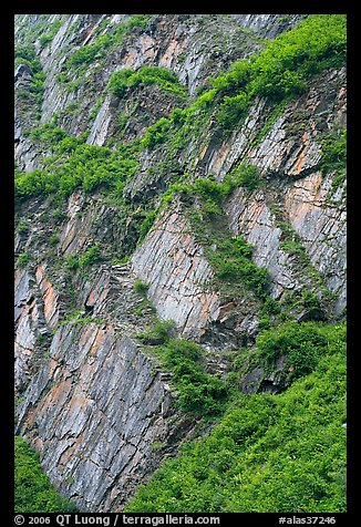 Vegetation and rocks on canyon walls, Keystone Canyon. Alaska, USA (color)