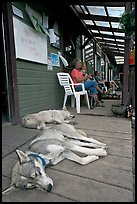 Dogs laying on porch of lodge. McCarthy, Alaska, USA