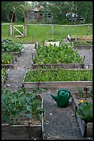 Community vegetable garden. McCarthy, Alaska, USA (color)