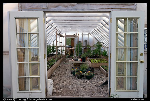 Greenhouse used for vegetable growing. McCarthy, Alaska, USA