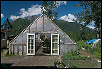 Greenhouse and vegetable garden. McCarthy, Alaska, USA (color)