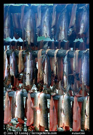 Drying whitefish and smoke, Ambler. North Western Alaska, USA (color)