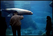 Visitors standing next to the northern sea lion aquarium, Alaska Sealife center. Seward, Alaska, USA (color)