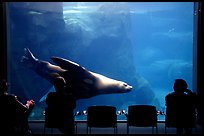 Visitors sitting next to the northern sea lion aquarium, Alaska Sealife center. Seward, Alaska, USA (color)