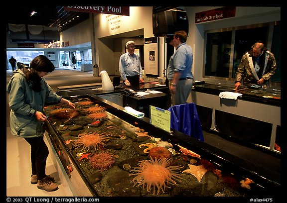 Tourist checks tidepool exhibit, Alaska Sealife center. Seward, Alaska, USA (color)