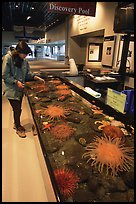 Tourist checks tidepool exhibit, Alaska Sealife center. Seward, Alaska, USA ( color)