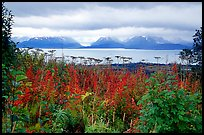 Ketchemak Bay and Kenai Mountains with a foreground of autunm grasses. Homer, Alaska, USA ( color)