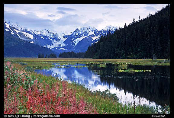 Chugatch Mountains reflected in pond near Portage. Alaska, USA (color)