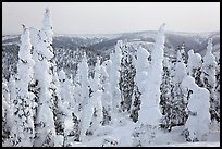 Forest plastered in snow. Alaska, USA ( color)