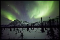 Aurora Borealis above Arctic Boreal Forest. Alaska, USA ( color)