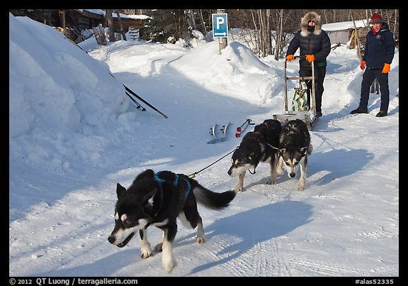 Dog mushing from parking lot. Wiseman, Alaska, USA (color)
