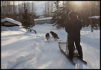 Dog sledding through village. Wiseman, Alaska, USA (color)